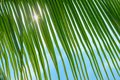 stock image of  Palm leaves, sun and sea