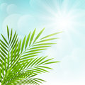 Palm leaves on sunny background sky Stock Photography
