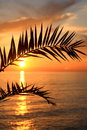 Palm leaves at sunset sundown over mediterranean sea with Royalty Free Stock Photos