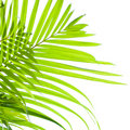 Palm leaves swaying in the breeze Royalty Free Stock Photo