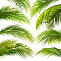 Palm leaves. Vector Royalty Free Stock Photo