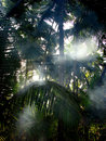 Palm Mist Royalty Free Stock Photos