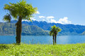 Palm near water, switzerland Stock Photography