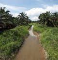 Palm oil plantation landscape Stock Photography