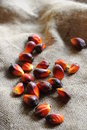 Palm Oil Seed Royalty Free Stock Photos