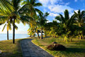 Palm path near beach Royalty Free Stock Image