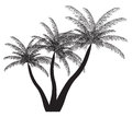 Palm silhouette vector illustration eps see my other works in portfolio Stock Photos