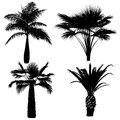 Palm silhouette at the white background Stock Photo