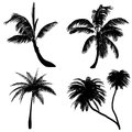 Palm silhouette at the white background Stock Image