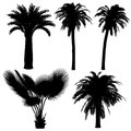 Palm silhouette at the white background Royalty Free Stock Photo
