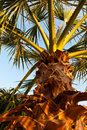Palm in Sunset Royalty Free Stock Photography