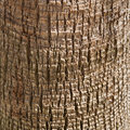 Palm texture Royalty Free Stock Images