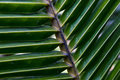Palm texture photography of at outdoors Royalty Free Stock Photos
