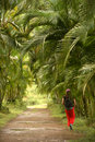 Palm trail Royalty Free Stock Photo