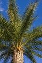 Palm tree Стоковое Изображение RF