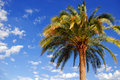 Palm tree Royalty Free Stock Photo