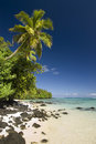 Palm tree above sandy and rocky beach aitutaki site of survivor cook islands Royalty Free Stock Photo