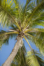 Palm tree against clear sky koh pha ngan thailand Stock Photography