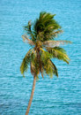 Palm tree against ocean Royalty Free Stock Photo