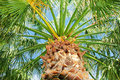 Palm tree against sky green blue clear Royalty Free Stock Photography