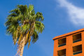 Palm tree and apartment house against blue sky Royalty Free Stock Photo