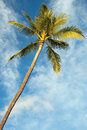 Palm tree with azure blue sky with clouds in background view of the Royalty Free Stock Photo