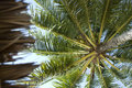 Palm tree background from below Stock Images