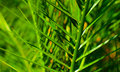 Palm tree background closeup detail of leaf green Stock Photos
