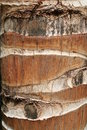 Palm tree bark - Close up Stock Photo