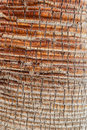 Palm tree bark close up shot of an intricated tee Stock Photo