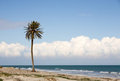 Palm tree on beach Stock Photography