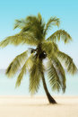 Palm Tree on a Beach Stock Photography