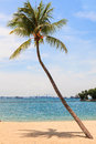Palm tree on the beach Royalty Free Stock Image