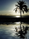 Palm tree on beach at dusk, night sunset Royalty Free Stock Photo