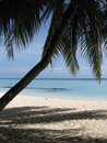 Palm tree and beach - Maldives Stock Image