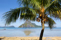 Palm tree on the beach philippines tropical in el nido Royalty Free Stock Photo