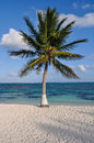 Palm tree with beach and sand Royalty Free Stock Images