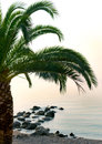 Palm tree beach by the sea shore Royalty Free Stock Photography