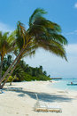 Palm tree on the beach by the water Royalty Free Stock Photo