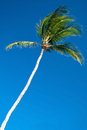 Palm tree with a beautiful azure blue sky in background Royalty Free Stock Photo