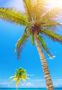 Palm tree beautiful on blue sky background tropical resort exotic nature caribbean coastline paradise beach romantic summer Stock Image