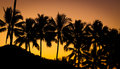 Palm tree at beautiful sunset Royalty Free Stock Image