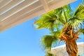 Palm_tree_blue_sky 库存图片