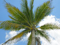 Palm tree and blue sky Stock Photography