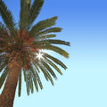 Palm tree with blue sky on the background Royalty Free Stock Photos