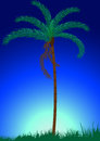 Palm tree on blue sky background Stock Image
