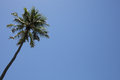 Palm tree on a blue sky Royalty Free Stock Photo