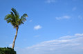 Palm tree at blue sky at okinawa japan Royalty Free Stock Photo