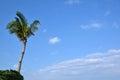 Palm tree at blue sky at okinawa japan Royalty Free Stock Photo