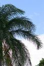 Palm Tree Branches Against a Bright Sky Royalty Free Stock Photo